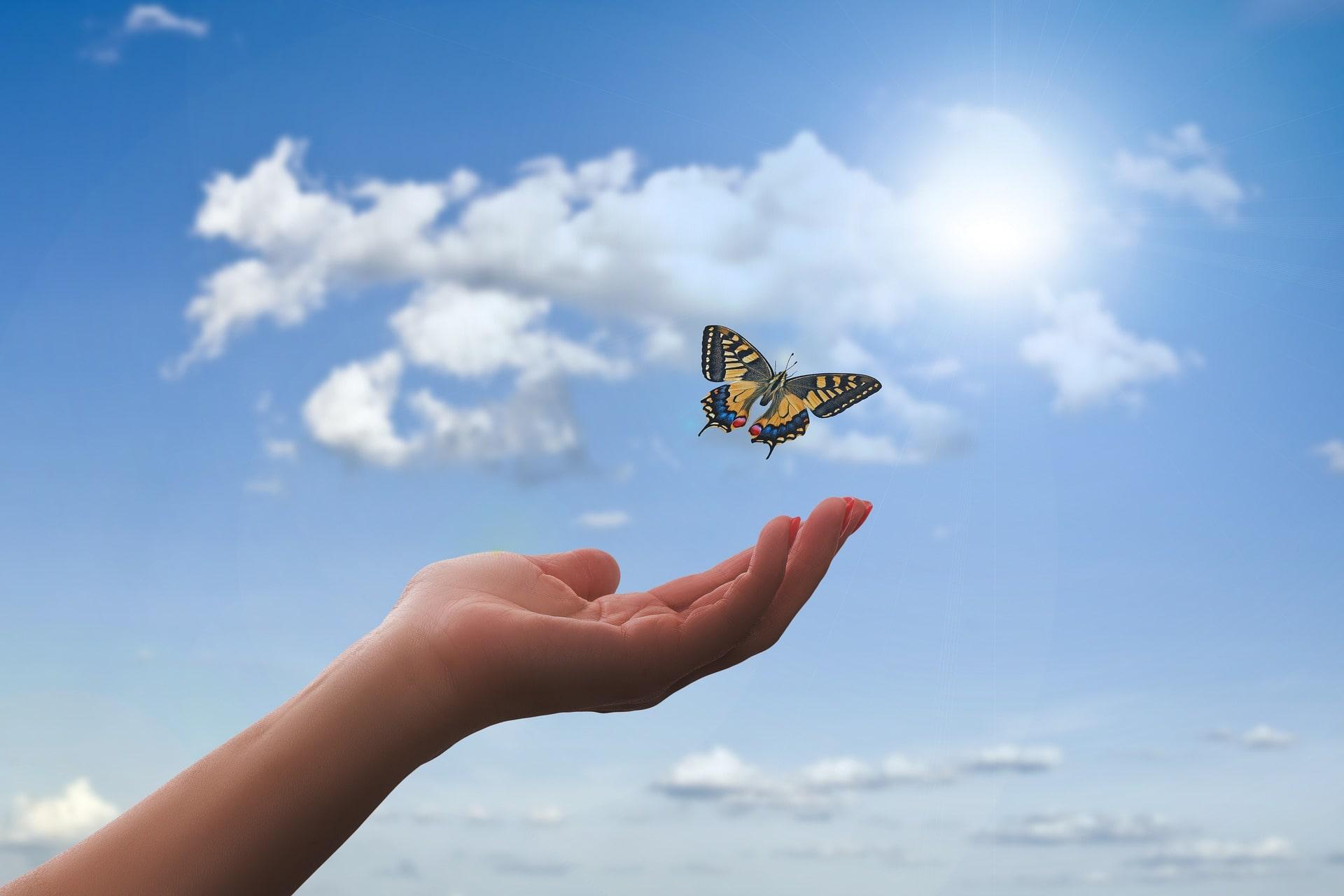 changer de vie main papillon envol
